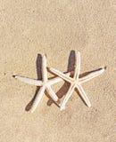 Estrelas do mar no fundo da areia Imagens de Stock Royalty Free