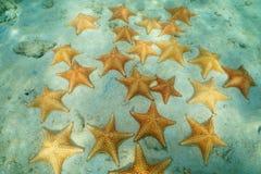 Estrelas do mar subaquáticas no seafloor nas Caraíbas Foto de Stock Royalty Free