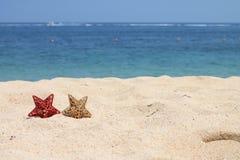Estrelas do Natal, Bali, Indonésia Fotografia de Stock Royalty Free