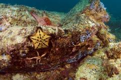 Estrelas do rock Imagens de Stock