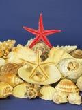 Estrelas e escudos dos peixes imagem de stock royalty free