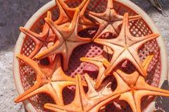 Estrelas ou estrelas do mar de mar Fotografia de Stock Royalty Free