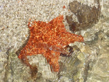 Estrella Fotografía de archivo