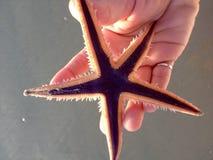 Estrella de ahorro Fotografía de archivo libre de regalías