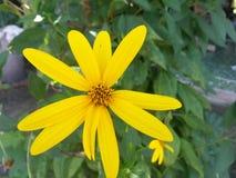 Estrella de la flor Foto de archivo