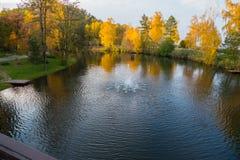 Estrella de la fuente en el lago con la reflexión del abedul de oro de las coronas en la orilla Novi Petrivtsi, Ucrania Imágenes de archivo libres de regalías