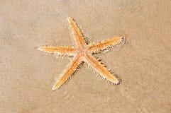 Estrella de Live Sea en la arena Fotos de archivo