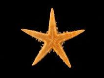 Estrella de mar Foto de archivo libre de regalías