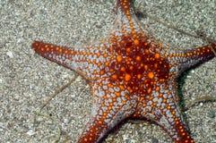 Estrella de mar Imágenes de archivo libres de regalías