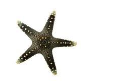 Estrella de mar Imagen de archivo libre de regalías