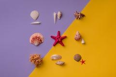 Estrella de mar adornada con las conchas marinas alrededor Imágenes de archivo libres de regalías