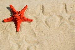 Estrella de mar en la arena Imágenes de archivo libres de regalías