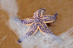 Estrella de mar en la playa Fotografía de archivo