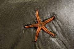 Estrella de mar en una playa Foto de archivo libre de regalías