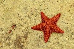 Estrellas de mar en la arena Imágenes de archivo libres de regalías