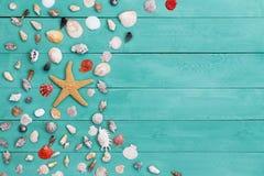 Estrella de mar y cáscaras clasificadas del mar en la madera manchada Foto de archivo