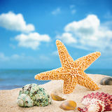 Estrella de mar y cáscaras coloridas Fotografía de archivo