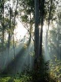 Estrella de Sun Fotos de archivo libres de regalías
