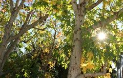 Estrella del árbol foto de archivo libre de regalías