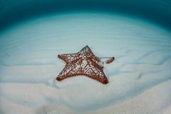 Estrella del Caribe en la arena foto de archivo
