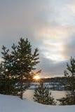 Estrella del invierno Fotos de archivo libres de regalías