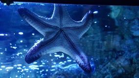 Estrella del mar foto de archivo libre de regalías