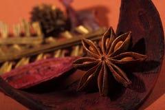 Estrella india del anís de la hierba Imagenes de archivo