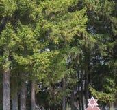 Estrella judía entre árboles Foto de archivo