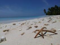 Estrella marina Imagen de archivo libre de regalías