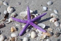 Estrella púrpura Fotografía de archivo libre de regalías