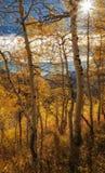 Estrella Sun del otoño Fotos de archivo libres de regalías