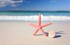 Estrella y concha marina de mar en la costa Fotos de archivo libres de regalías