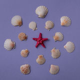 Estrella y conchas marinas de Mar Rojo Foto de archivo