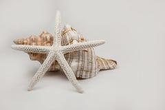 Estrella y shell Imagenes de archivo