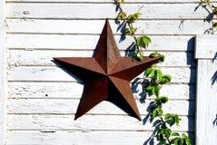 Estrella y vid Imagen de archivo libre de regalías