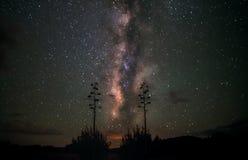 Estrellas de la vía láctea y plantas de desierto Imagen de archivo