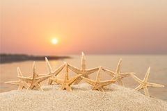Estrellas de mar foto de archivo libre de regalías
