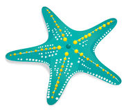Estrellas de mar libre illustration