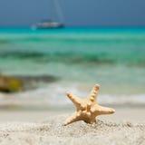 Estrellas de mar. Fotografía de archivo