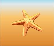 Estrellas de mar Fotos de archivo