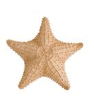 Estrellas de mar Fotos de archivo libres de regalías