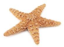 Estrellas de mar Imagen de archivo libre de regalías