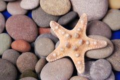 Estrellas de mar Fotografía de archivo libre de regalías