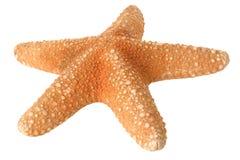 Estrellas de mar aisladas fotografía de archivo