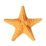Estrellas de mar aisladas Fotos de archivo libres de regalías