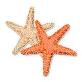 Estrellas de mar aisladas en el fondo blanco Ilustración del vector Fotos de archivo
