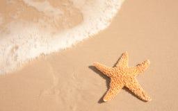 Estrellas de mar al lado del agua del océano Fotografía de archivo