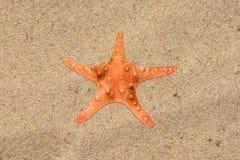 Estrellas de mar anaranjadas en el primer de la arena de la playa Imagen de archivo libre de regalías