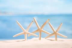 Estrellas de mar blancas con el océano, en la playa de la arena, el cielo y el paisaje marino blancos Fotografía de archivo