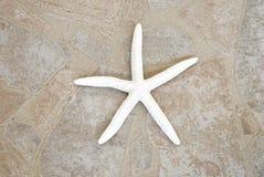 Estrellas de mar blancas en el fondo de piedra Imagenes de archivo